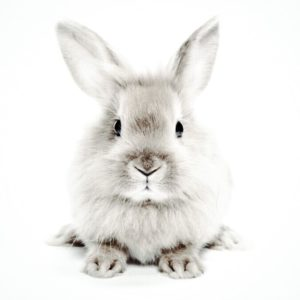 Cruelty-free-vs-vegan-bunny-sustainable-jungle