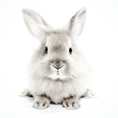 Cruelty-free-vs-vegan-bunny-sustainable-jungle