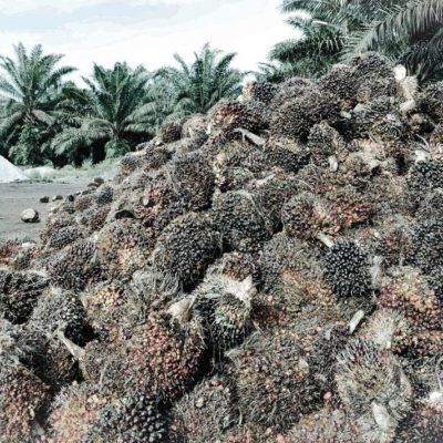 Palm-Oil-Free-Sustainable-Jungle