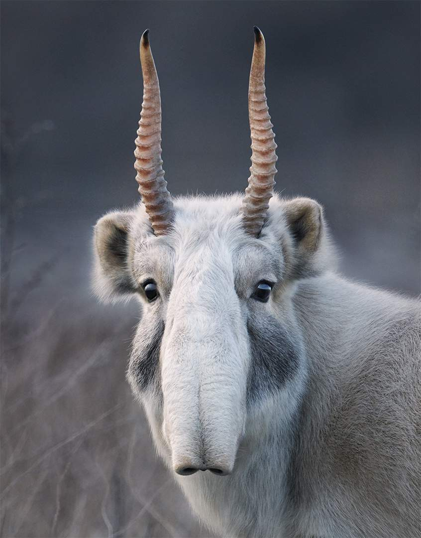 The role of art in connecting with nature through the lens of Tim Flach #timflach #nature