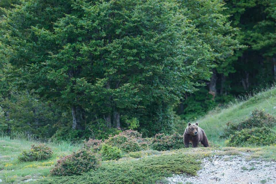Wolf Tracking with Daniela from Wildlife Adventures on a European Sarafi #europeansafari