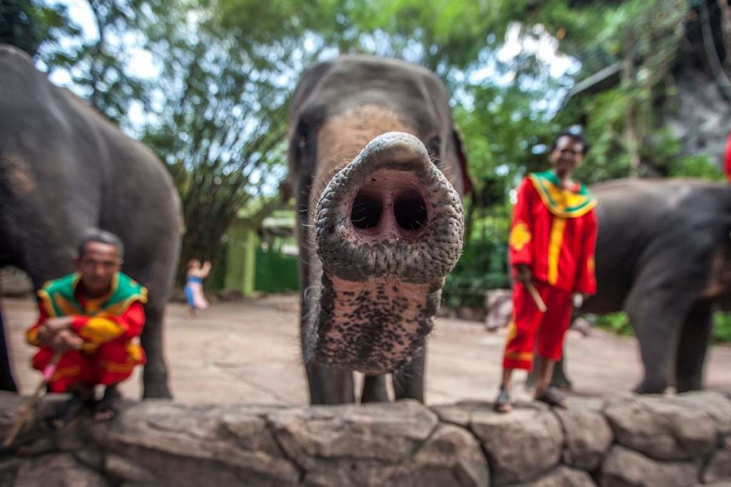 Elephants and Trainers in Bangkok, Thailand. Image by Aaron 'Bertie' Gekoski