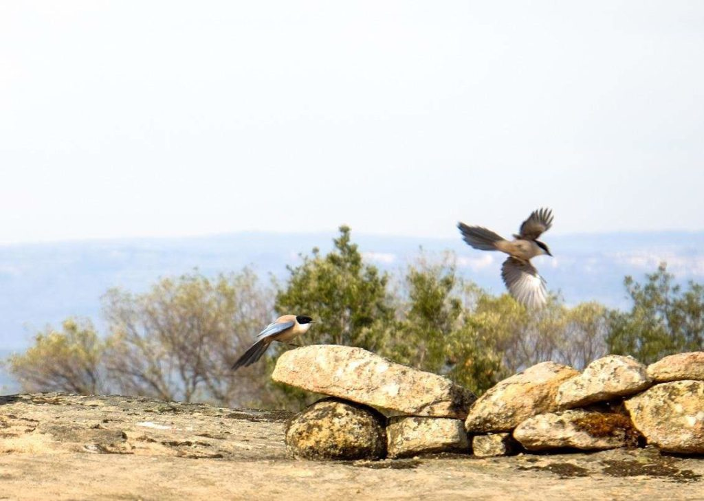 Birding In Faia Brava A Vulture Experience With Wildlife Portugal #vulturewatching #portugal