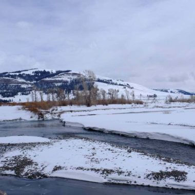 LIVING WITH NATURE: IMPORTANT LEARNINGS FROM THE EDGE OF YELLOWSTONE NATIONAL PARK