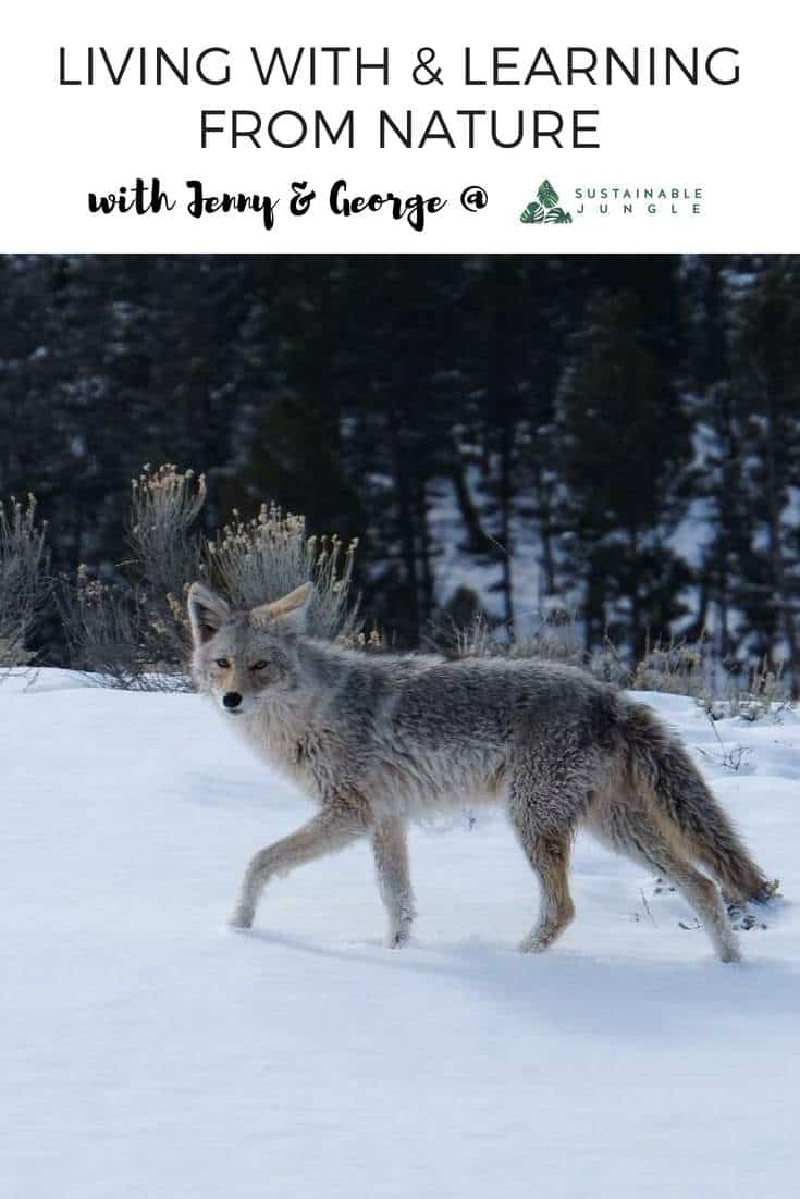 Living With Nature - Important Learnings From The Edge Of Yellowstone National Park #livedeliberately #yellowstonenationalpark #wildplaces #purpose