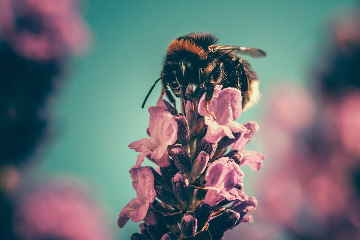 Regenerative agriculture helping bees in california through the most delicious honey mead! #Regenerativeagriculture #goldencoastmead