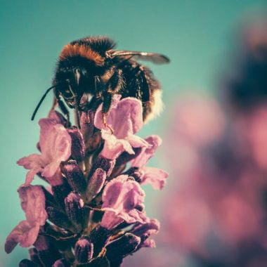 REGENERATIVE AGRICULTURE HELPING BEES IN CALIFORNIA THROUGH THE MOST DELICIOUS HONEY MEAD!