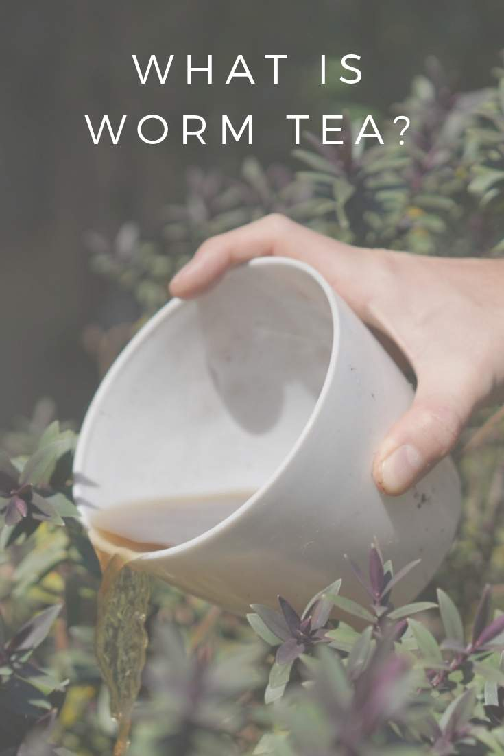 What is Worm Tea? #wormtea #composting