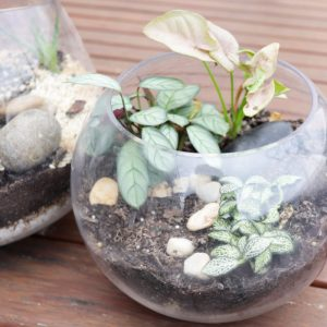 Terrarium-eco-friendly-gift-sustainable-jungle