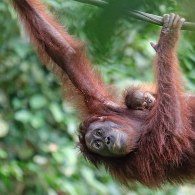 """SUSTAINABLE"" PALM OIL: HAVE WE FOUND WAYS TO DO PALM OIL BETTER YET?"