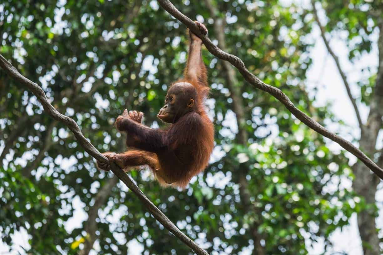 Sustainable Palm Oil: Have we found ways to do palm oil better yet? Photo by Teodor Kuduschiev on Unsplash #sustainablepalmoil #sustainablejungle