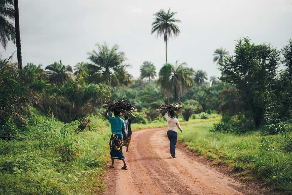 Sustainable Palm Oil: Have we found ways to do palm oil better yet? Sierra Leone, West Africa - Photo by Annie Spratt on Unsplash #sustainablepalmoil #sustainablejungle