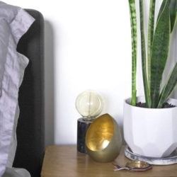 Apartment Gardening - Easy way to decorate - snake plants purify air