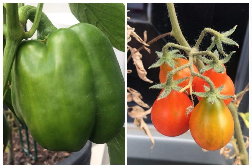 Balcony-Gardening-Growing-Food-Sustainable-Jungle