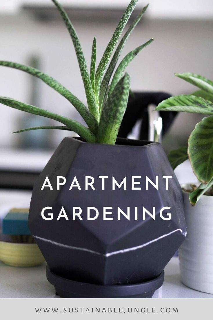 Apartment Gardening - Why you should plant what to plant and where to plant and how to look after your plants