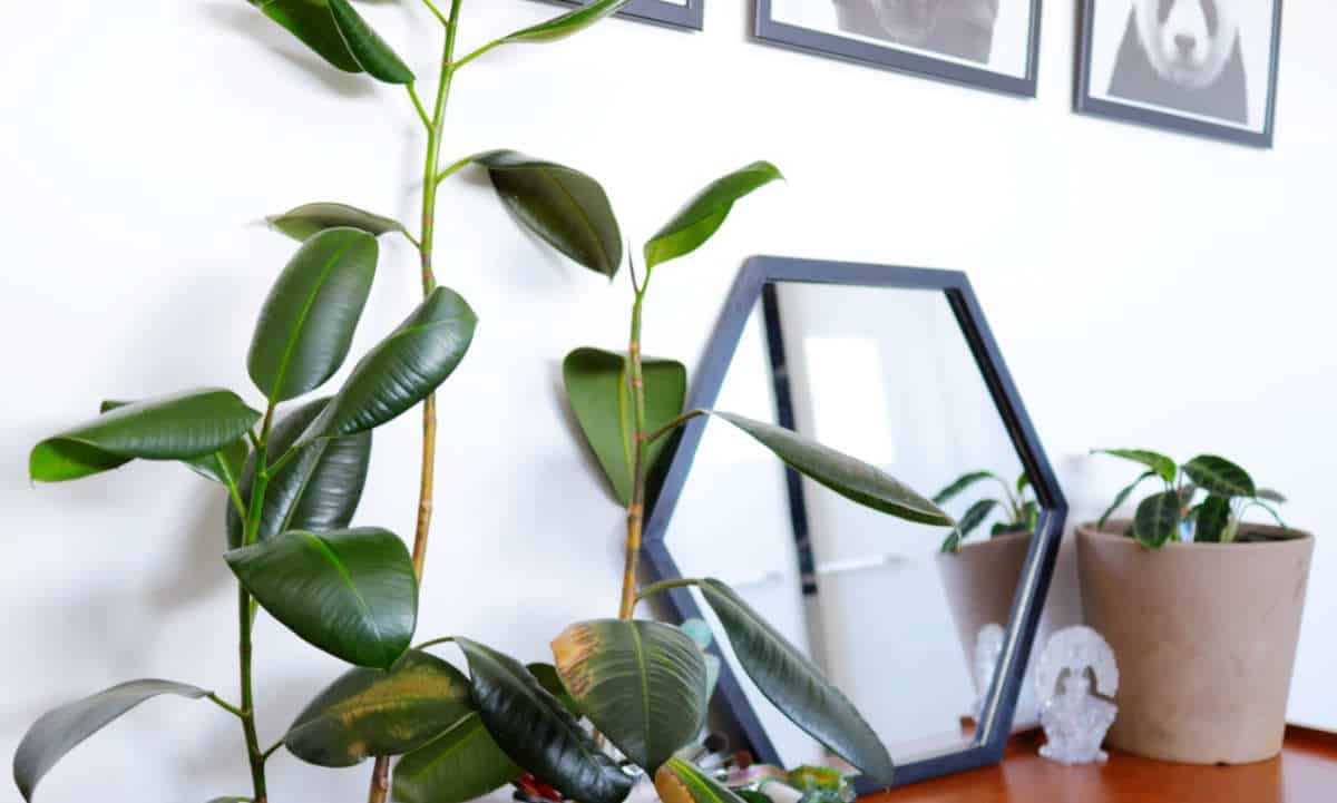 Apartment Gardening : Think of this as a start-up guide to apartment gardening for beginners... #apartmentgardening #sustainablejungle