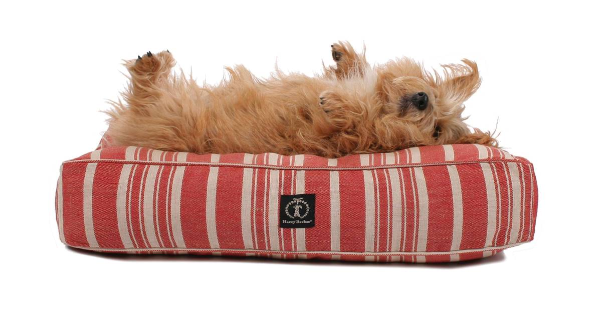 Eco Friendly Dog Beds made from Recycled Water Bottles - Image by Harry Barker