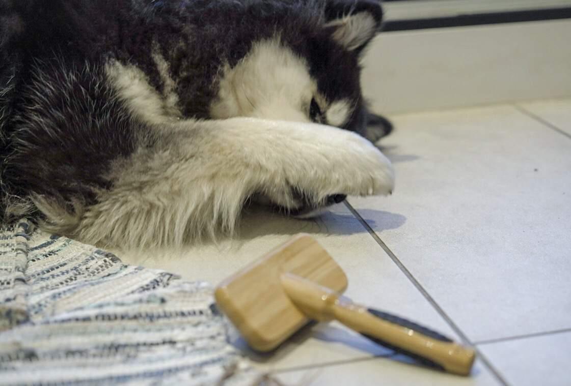 Bamboo Dog Grooming