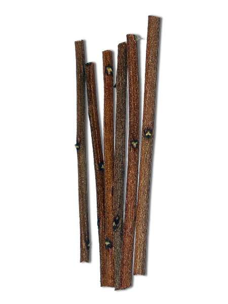 Zero Waste Toothbrush Options - Image by Brush with Bamboo #zerowastetoothbrush #bambootoothbrush