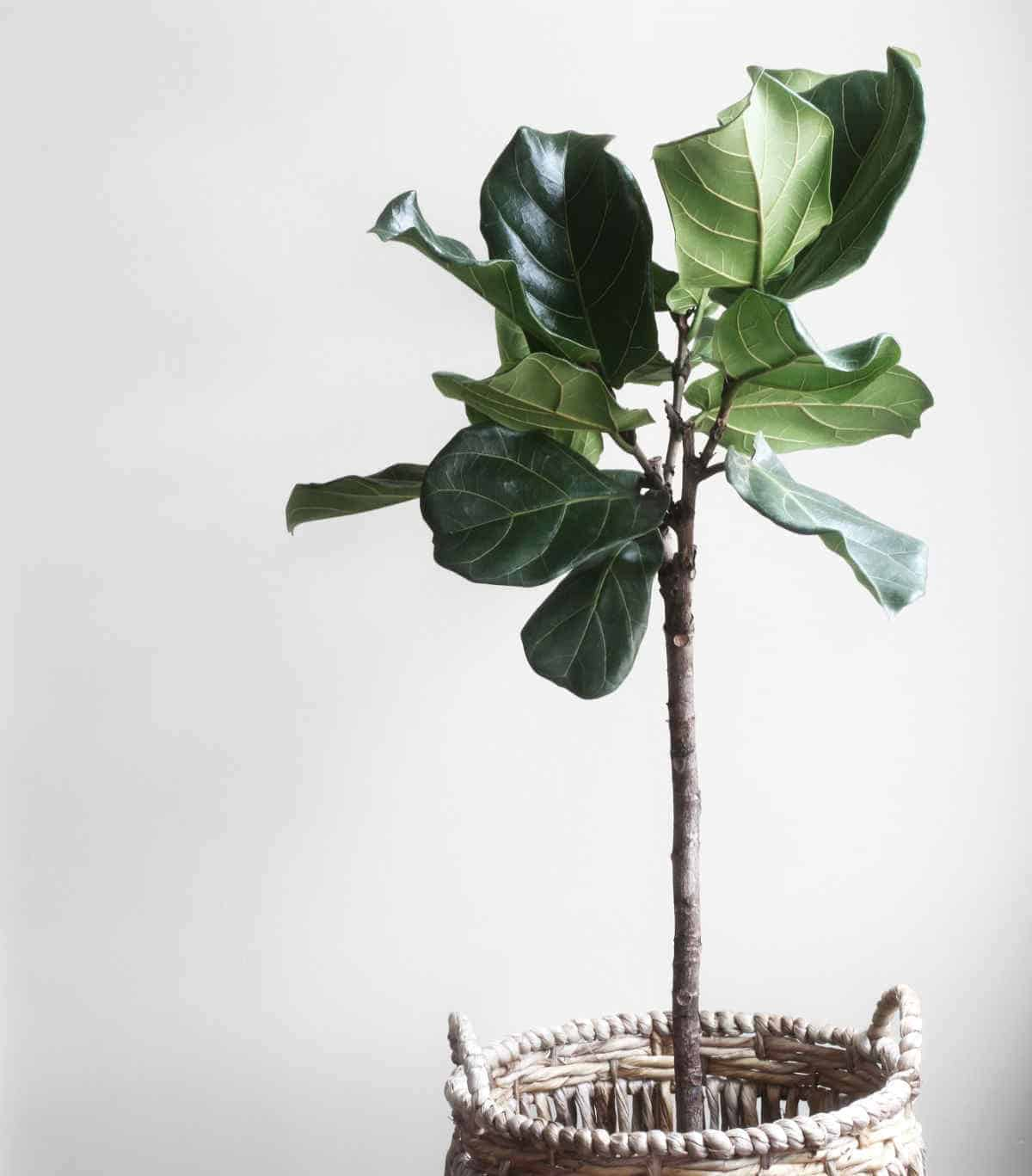 Beautiful-plant-eco-friendly-gifts-Sustainable-Jungle
