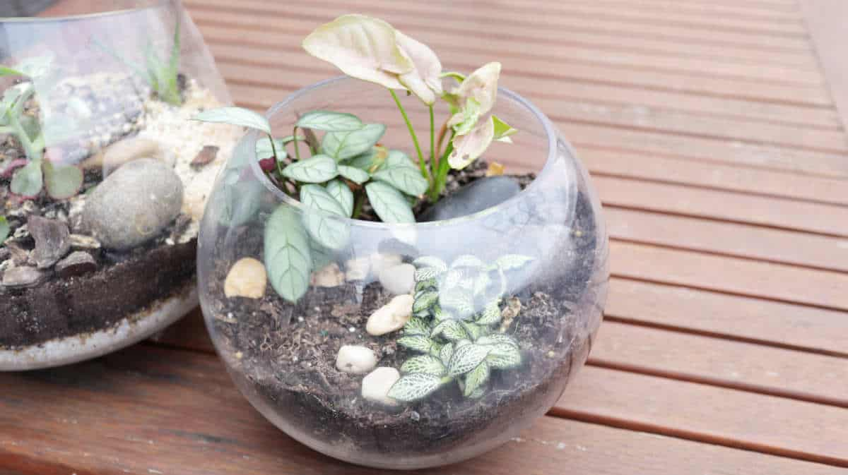 Terrarium-eco-friendly-gifts-sustainable-jungle