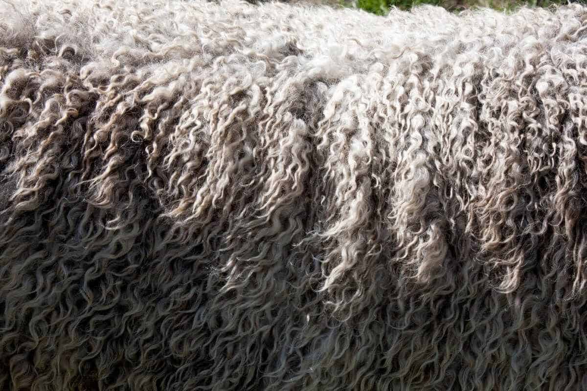 While most fabrics that make up the world of sustainable fashion deserve a bit of scrutiny, wool not only calls into question its impact on the environment and laborers, but its impact on wool-producing animals Photo by Vince Veras on Unsplash #sustainablefashion #ethicalwool