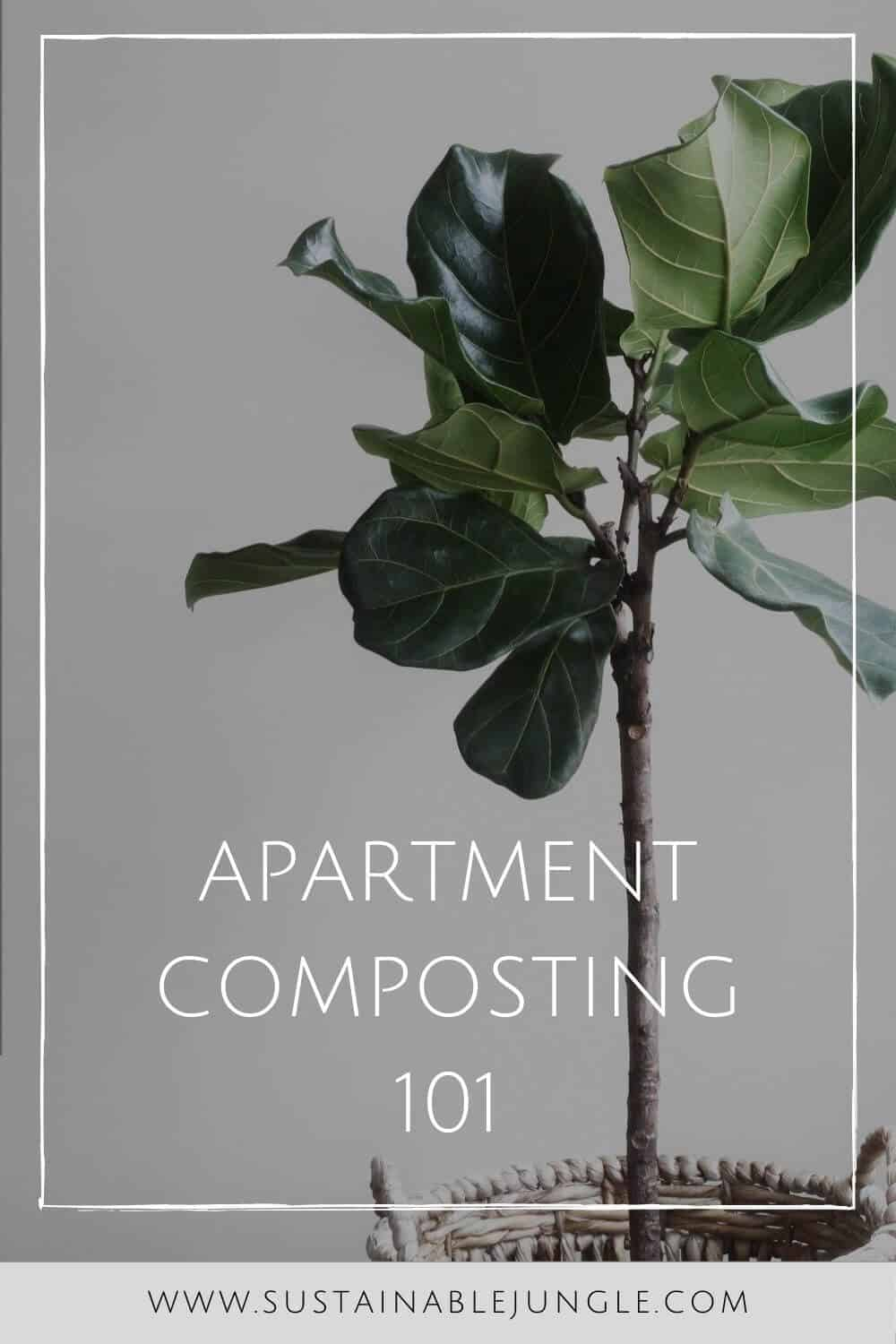 Living in a small apartment doesn't mean you can't do your part. Learn how to compost in an apartment with our apartment composting guide... Photo by Lauren Mancke on Unsplash #apartmentcomposting #sustainablejungle