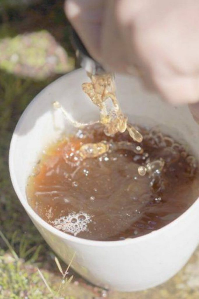 How To Make Worm Tea: The All-Natural Boost Juice For Plants #wormtea #composting #sustainablejungle