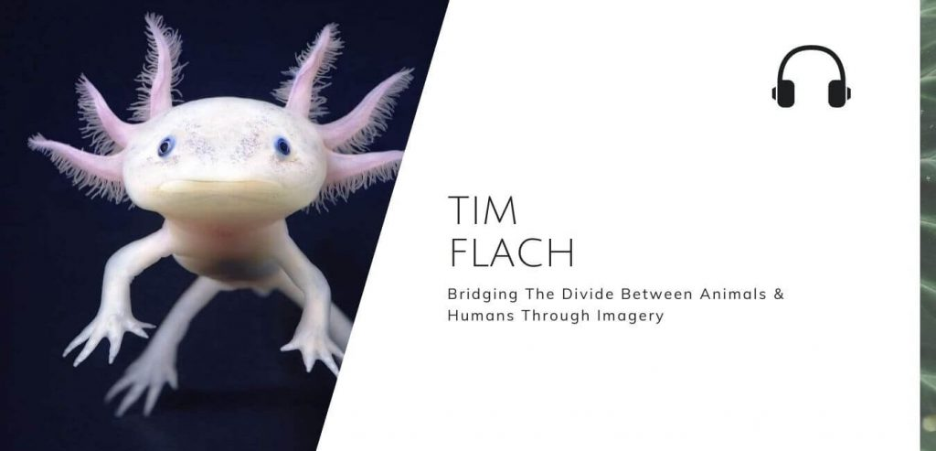 Bridging The Divide Between Animals And Humans Through Imagery with Tim Flach on the Sustainable Jungle Podcast #sustainablejungle
