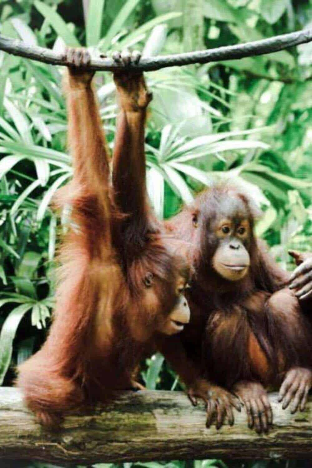 Should you buy palm oil free? #palmoilfree #sustainablepalmoil