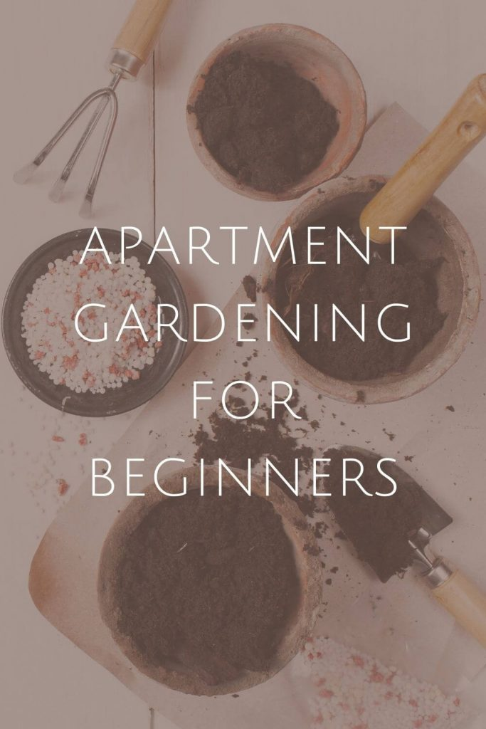 Apartment Gardening at Sustainable Jungle#zerowaste #sustainablejungle