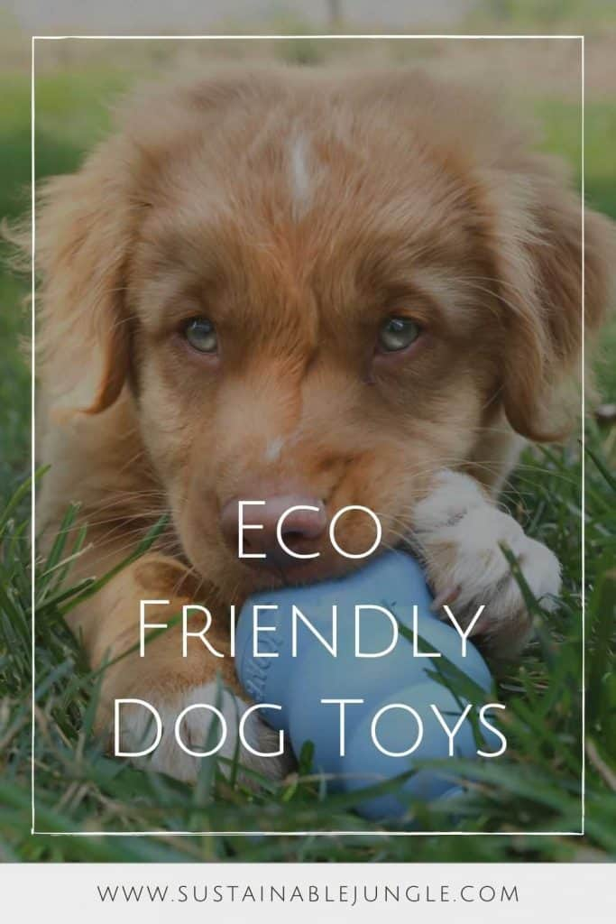 Dogs can really tug at your heartstrings. Unfortunately, they also tug a bit on the planet, too. So, to reduce our foot prints, or rather paw prints, we found some of the most eco friendly dog toys for sustainable pooches.  Image by Kong #ecofriendlydogtoys #sustainabledogtoys #sustainablejungle