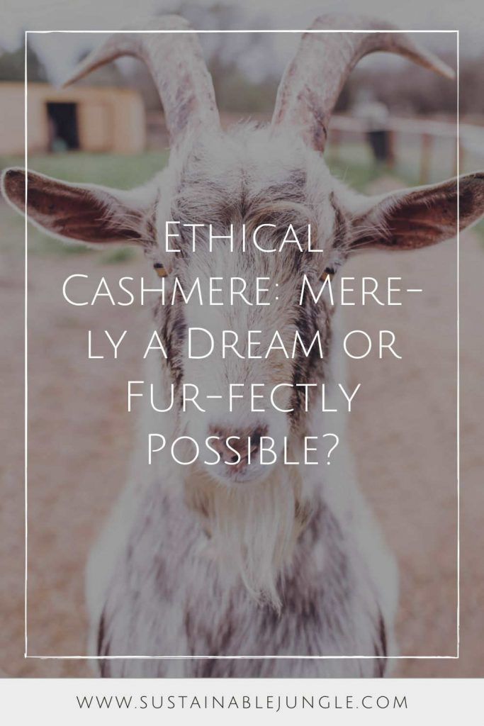 Ethical and cashmere. Can the two coexist, or is it just another oxymoron of our fashion imagination? Image by Edgar Chaparro on Unsplash #ethicalcashmere #sustainablejungle