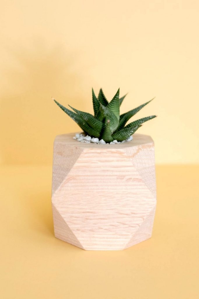 You know what they say: waste not, want not. For zero waste gifts, that takes on a whole new meaning!  Image by Reclaimed Planters #zerowastegifts #bestzerowastegifts #zerowastegiftideas #sustainablejungle