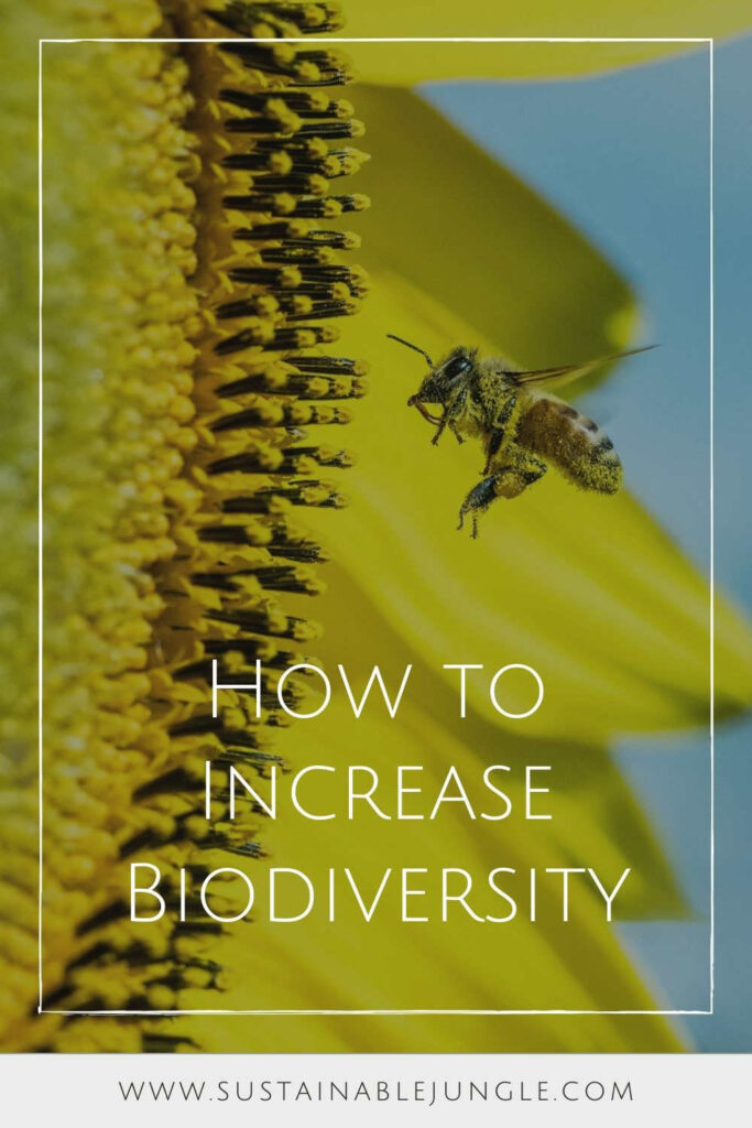 We're either part of a thriving global ecosystem, or we're undermining it. It's time we learn how to increase biodiversity like our life depends on it. Image by Image by David Clode on Unsplash #howtoincreasebiodiversity #howtoincreasebiodiversityinyourhome #sustainablejungle