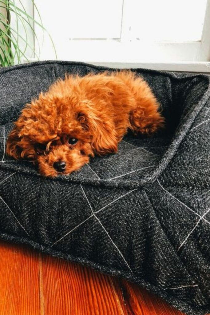 Don't go barking up the wrong tree next time you come home to the messy fluff strewn about the house. Instead take a look at our list of eco friendly dog beds... Image by Brentwood Home #ecofriendlydogbeds #sustainable jungle