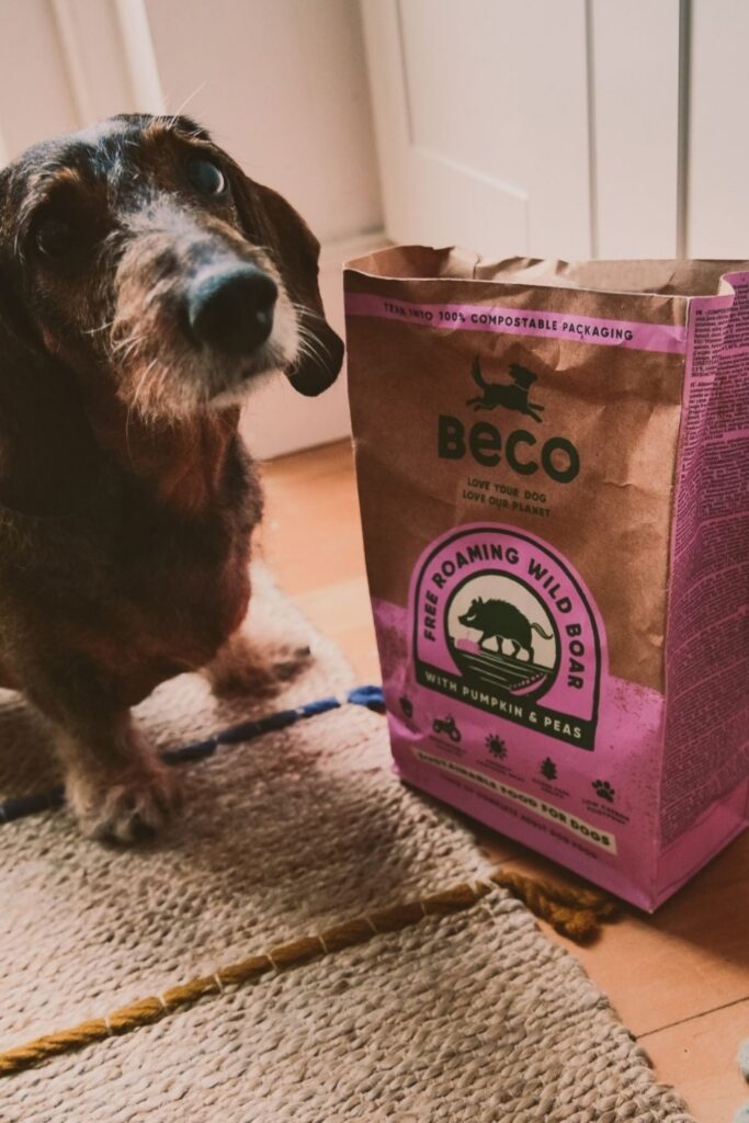 Attention all conscious pet owners: you can help change the world, one sustainable kibble at a time with these eco friendly pet food options. Image by Beco Pets #ecofriendlypetfood #sustainablepetfood #sustainablejungle