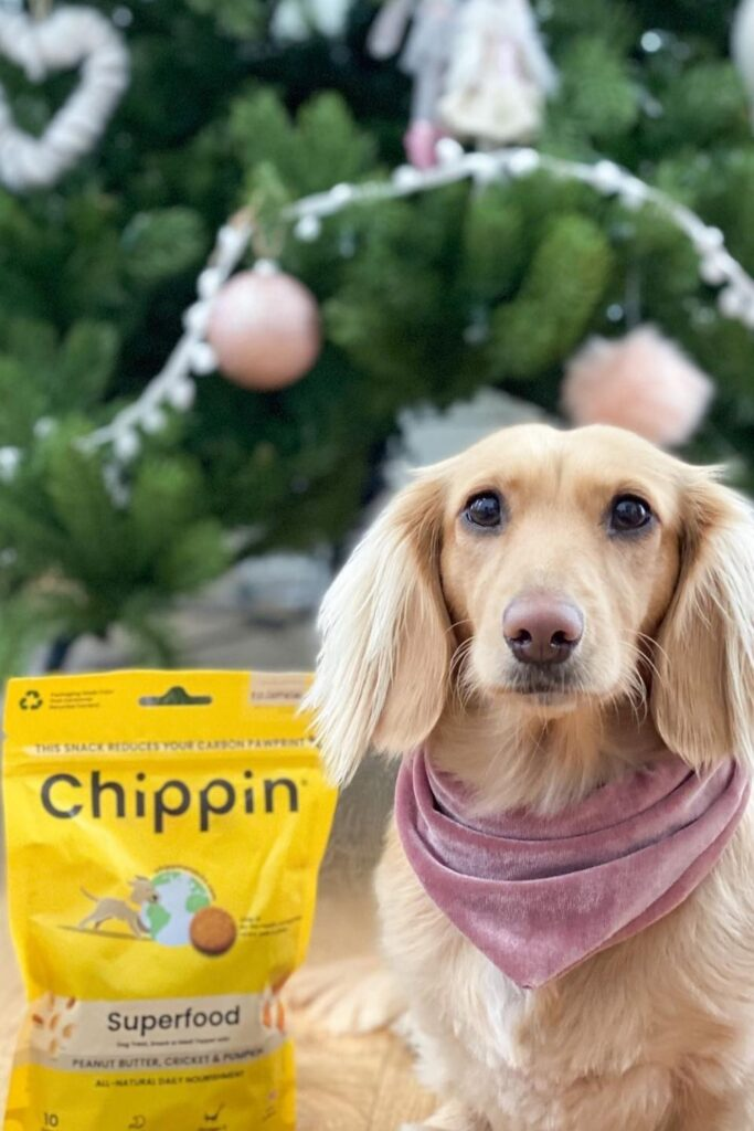 Attention all conscious pet owners: you can help change the world, one sustainable kibble at a time with these eco friendly dog food options.  Image by Chippin #ecofriendlydogfood #sustainabledogfood #sustainablejungle