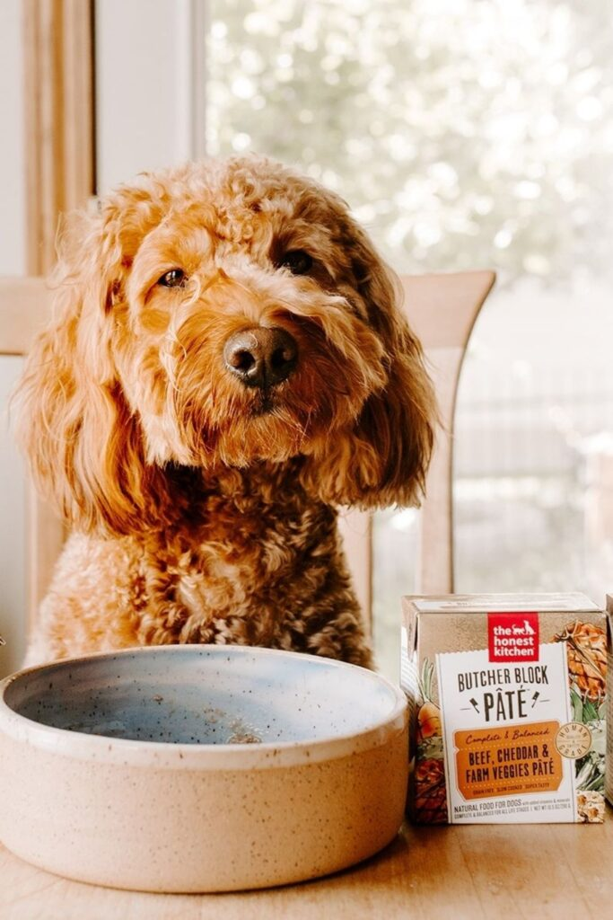 Attention all conscious pet owners: you can help change the world, one sustainable kibble at a time with these eco friendly dog food options.  Image by The Honest Kitchen #ecofriendlypdogfood #sustainabledogfood #sustainablejungle