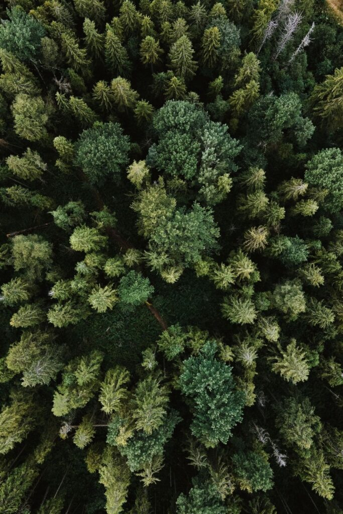 We've taken a deep dive into the world of offsets, uncovering the best carbon offset providers that will legitimately reduce your footprint. Photo by Olena Sergienko on Unsplash #bestcarbonoffsetprograms #bestcarbonoffsetproviders #sustainablejungle