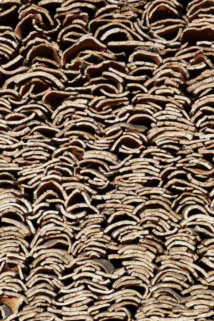 What is cork fabric? Now we're turning to trees, some of our favorite textile producers, to explore cork and its sustainable merit Photo by Pablò on Unsplash #whatiscorkfabric #sustainablejungle