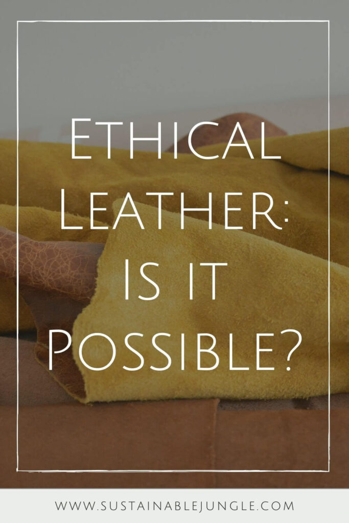 Holy cow, is there a lot to unpack when it comes to the question of ethical leather! It first requires us to decide whether ethical leather products are even possible. Photo by Ranurte on Unsplash #ethicalleather #sustainablejungle